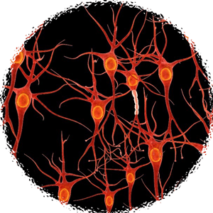 Synapses -